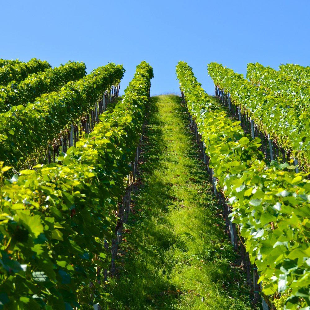 Úprava vína